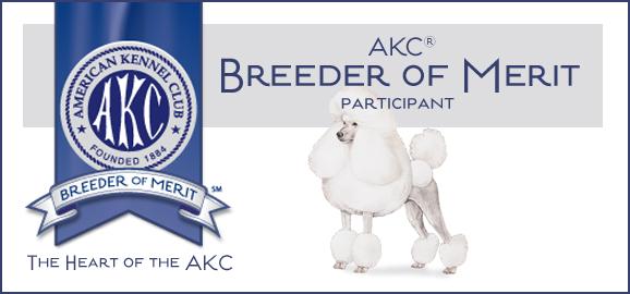 Argan Standard Poodles Intexas Standard Poodle Breeders